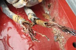 Imagen 5. Cable bobina de motor.